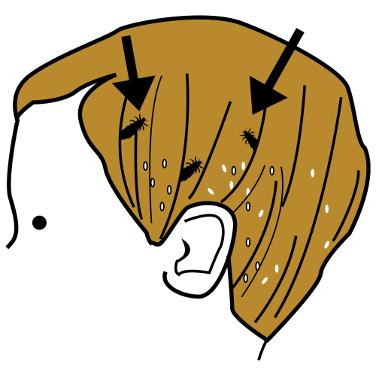 zorri